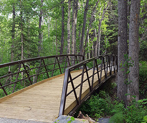 Beauvais Lake Provincial Park trail bridge
